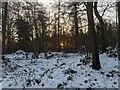 TF0820 : Winter Woodland Dawn by Bob Harvey
