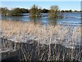 TF3802 : Reeds and ice - The Nene Washes by Richard Humphrey