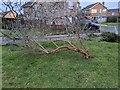TF0820 : Ageing trees by Bob Harvey