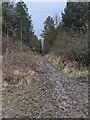 TF0720 : A muddy track by Bob Harvey