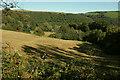 SX8753 : Sheep pasture above Kilngate by Derek Harper