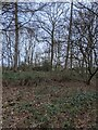 TF0820 : Winter woodland by Bob Harvey