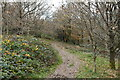 TQ5538 : Tunbridge Wells Circular Walk Link Path by N Chadwick