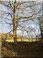 TF0820 : Looks like spring by Bob Harvey