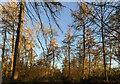 TF0820 : Sunlight and shadows on the path by Bob Harvey
