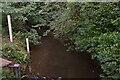 TQ4235 : River Medway by N Chadwick