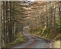 NT3436 : Forest road on Plora Craig by Jim Barton