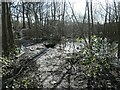 SE3423 : Flooded path, east side, Stanley Marsh nature reserve by Christine Johnstone