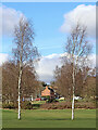 SO8994 : Birch trees on Penn Common golf course, Staffordshire by Roger  Kidd