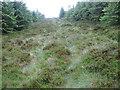 NS5405 : Towards the top of Prickeny Hill by Chris Wimbush