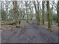 SO8791 : Woodland Path by Gordon Griffiths