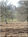 SX9784 : Powderham Park and a distant view of the belvedere by David Smith