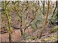 SD8103 : Prestwich Clough by David Dixon