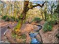 SD8003 : Deyne Brook, Prestwich Clough by David Dixon