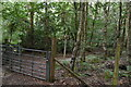 TQ8622 : Footpath junction, Flatroper's Wood by N Chadwick