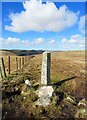 SX2574 : Old Boundary Marker on Langston Down by P G Moore