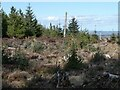 NY9655 : New planting in Slaley Forest by Oliver Dixon