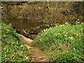 SX8063 : Daffodils by the Dart by Derek Harper