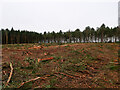 TG3131 :  Forest operations clear felling in progress by David Pashley