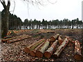 TG3131 : Forestry operations Timber waiting to be carted by David Pashley