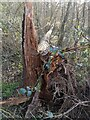 TF0720 : Broken, not uprooted by Bob Harvey
