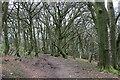 ST1785 : Coed Tranch-yr-Hebog by John Light