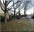 ST3188 : Deciduous trees in winter, Wyndham Street, Newport by Jaggery