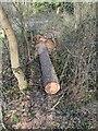 TF0720 : Logged by Bob Harvey