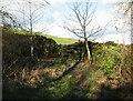 SD2779 : The Cumbria Way near Bortree Stile by Adrian Taylor