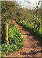 SX8865 : John Musgrave Heritage Trail near Marldon Road by Derek Harper