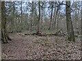 TF0820 : The wreckage of an Oak by Bob Harvey