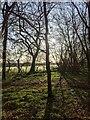 TF0820 : Sunshine and frost by Bob Harvey