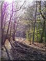 TL7906 : Spring Sunshine near Twitty Fee by Roger Jones