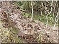 NT7671 : Landslide debris, Dunglass Dean by Richard Webb
