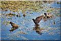 SD7808 : The Starlings' Bird Bath by David Dixon