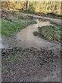 TF0820 : A frozen puddle by Bob Harvey