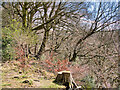 SD7915 : Woodland above Brooksbottoms Mill by David Dixon
