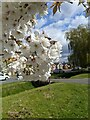 TF0820 : Spring Blossom by Bob Harvey