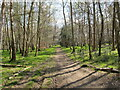 SU9486 : Permissive path with spring leaves, Egypt Woods by David Hawgood