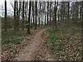 SU5338 : Path in Micheldever Woods by Sandy B