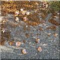 NT2470 : Thrushes' anvil by M J Richardson