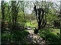 SK2821 : Entrance to Consortium Wood by Ian Calderwood