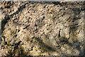SO7459 : Precambrian rock by Philip Halling