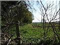 SO8691 : Plantation Edge by Gordon Griffiths