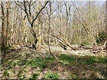NS7791 : Fir Park, Polmaise by Richard Webb