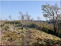 NS7791 : Gillies Hill by Richard Webb