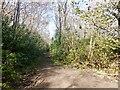 NS7691 : Path, Fir Park by Richard Webb