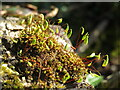 NT2470 : Moss on the wall by M J Richardson