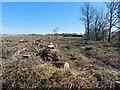 NZ1183 : Edge Plantation by Graham Robson