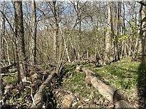 TQ6637 : Woodland near Owl House by Oast House Archive
